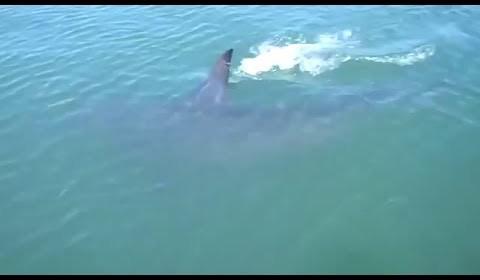 Shark Eats Shark /15A-PD2-014