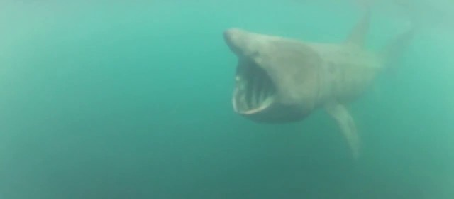 Swimmer Nearly Swallowed by Shark