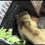 Born Free Foundation – Animals from around the world!
