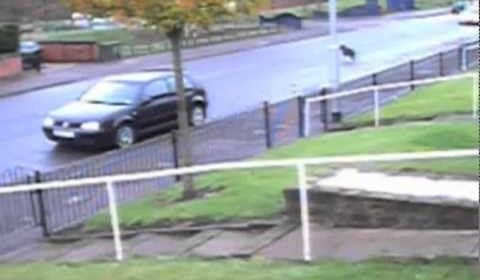 Caught on CCTV – Dog Hit and Run
