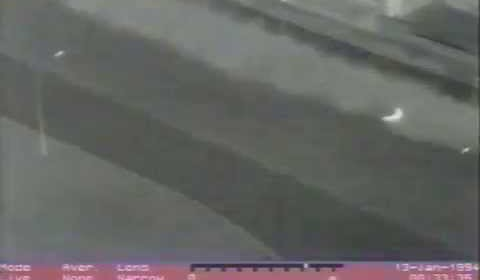 Police Dog Chases Suspect